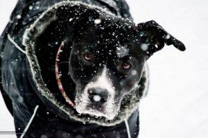 beautiful dog with falling snow closeup photography